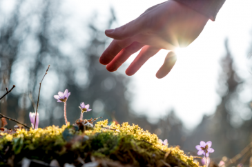 Doğada Çevrim İçi Olmak